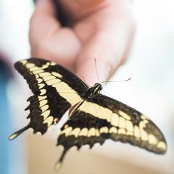 Butterfly6web