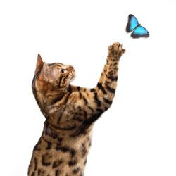 ButterflyCat250x250