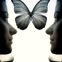 ButterflyMirrorweb
