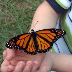 Butterflyhand250