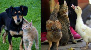 Katterhundfåglar